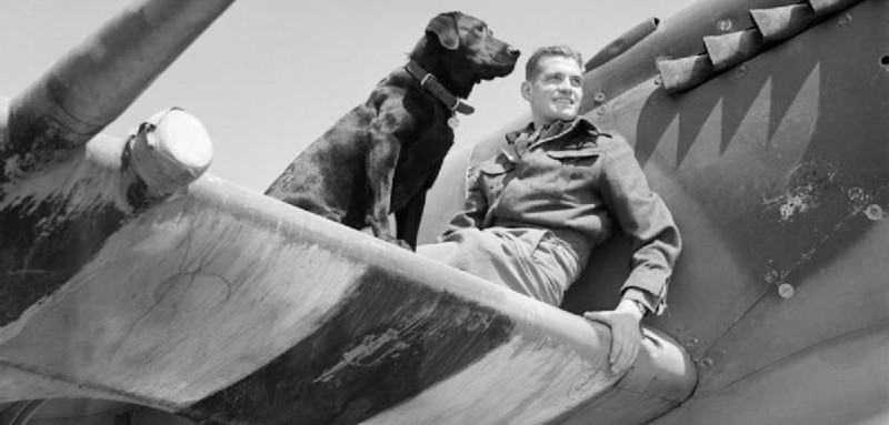 wing_commander_j_e_johnnie_johnson_commanding_no-_144_canadian_wing_on_the_the_wing_of_his_supermarine_spitfire_mk_ix_with_his_labrador_retriever_sally_at_bazenville_normandy_31_july_1944-_cl