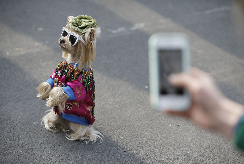 TOPSHOT - A dog wearing sunglasses is pictured in the street prior the Gucci show during the Women's Fall/Winter 2017/2018 fashion week, on February 22, 2017 in Milan.  / AFP / Marco BERTORELLO        (Photo credit should read MARCO BERTORELLO/AFP/Getty Images)