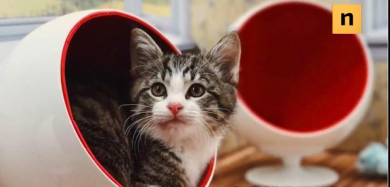 cat-crop