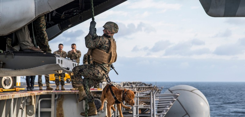"""170321-N-XT039-396 PHILIPPINE SEA (March 21, 2017) Lance Cpl. Alex Marquissee, a military working dog (MWD) handler, from Appleton, Wis., and Gage, his MWD, both attached to the 31st Marine Expeditionary Unit (MEU), fast rope from an MV-22B Osprey, assigned to the """"Flying Tigers"""" of Marine Medium Tiltrotor Squadron (VMM) 262, onto the port aircraft elevator of amphibious assault ship USS Bonhomme Richard (LHD 6). Bonhomme Richard, flagship of the Bonhomme Richard Expeditionary Strike Group, with embarked 31st MEU is on a routine patrol, operating in the Indo-Asia-Pacific region to enhance warfighting readiness and posture forward as a ready-response force for any type of contingency. (U.S. Navy photo by Mass Communication Specialist Seaman Apprentice Jesse Marquez Magallanes/Released)"""