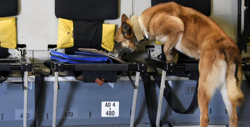 Detection training takes K-9 skills to new heights