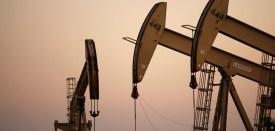 oil crop