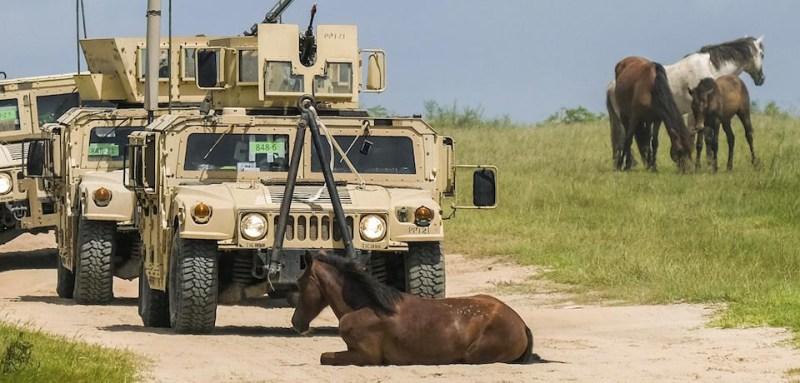 Wild Horses of JRTC