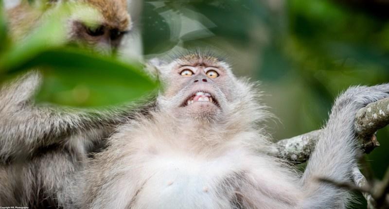 Monkeyweirdo