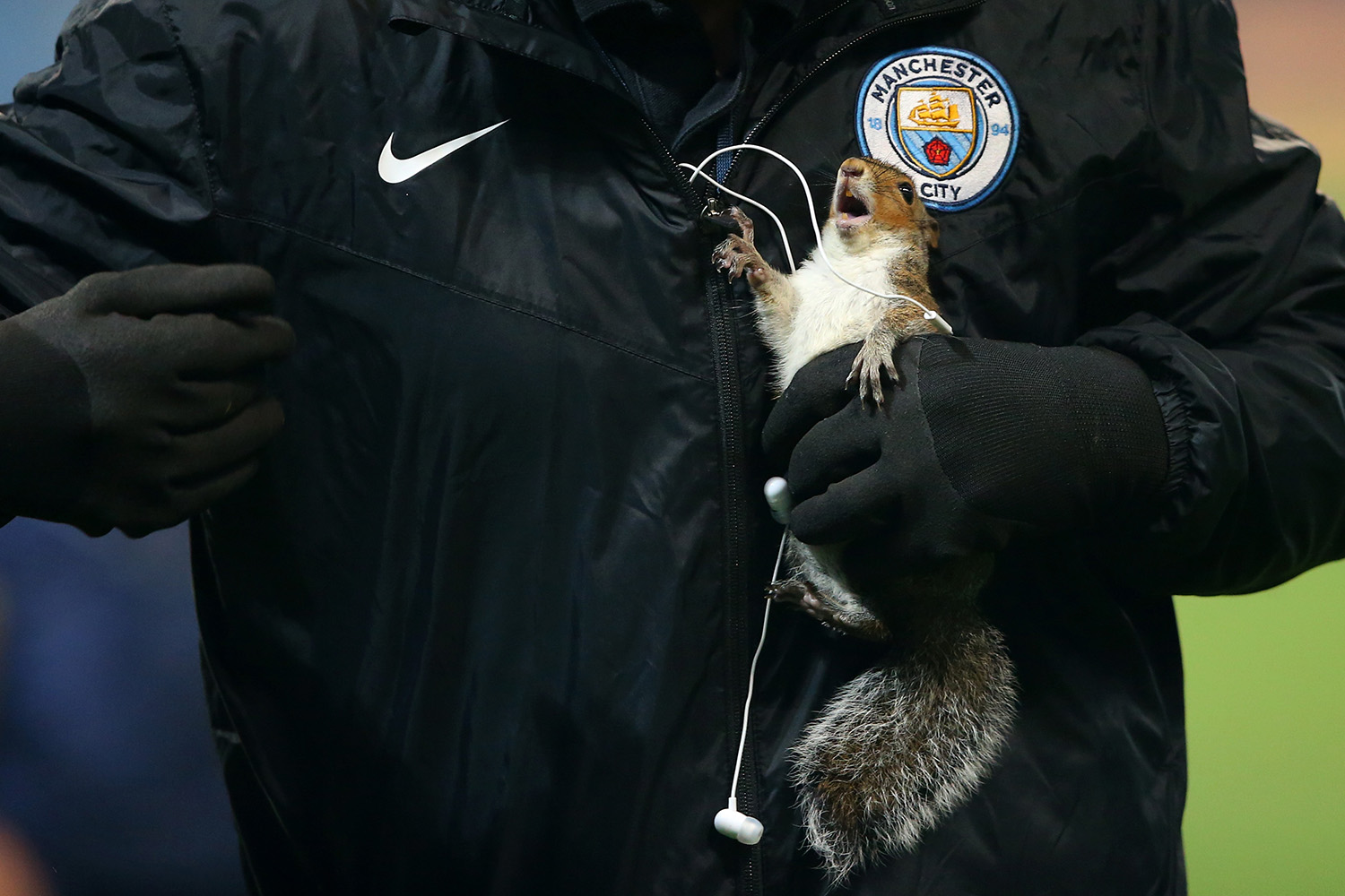 MANCHESTER, ENGLAND - OCTOBER 24:  A squirrel is removed from the pitch during the Carabao Cup Fourth Round match between Manchester City and Wolverhampton Wanderers at Etihad Stadium on October 24, 2017 in Manchester, England.  (Photo by Alex Livesey/Getty Images)