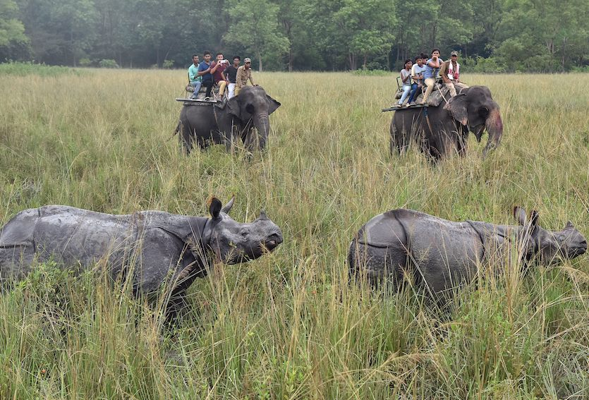 Tourists riding on elephants watch Indian one horn rhinoceroses at Pobitora wildlife sanctuary, on October 2, 2017. Pobitora wildlife sanctuary and Kaziranga National Park reopened for tourist season after experiencing severe floods. ( BIJU BORO/AFP/Getty Images)