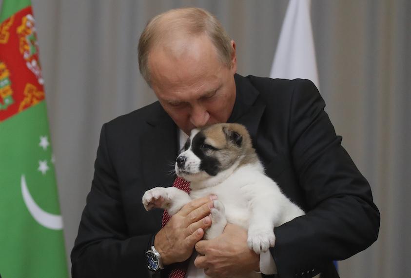 TOPSHOT - Russian President Vladimir Putin kisses a Turkmen shepherd dog, locally known as Alabai, received by Turkmenistan's President Gurbanguly Berdimuhamedov during a meeting in Sochi, on October 11, 2017.  / AFP PHOTO / POOL / MAXIM SHEMETOV        (Photo credit should read MAXIM SHEMETOV/AFP/Getty Images)