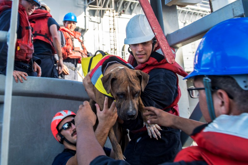 Sailors help Zeus, one of two dogs accompanying two mariners who were aided by the amphibious dock landing ship USS Ashland (LSD 48). (U.S. Navy photo by Mass Communication Specialist 3rd Class Jonathan Clay/Released)