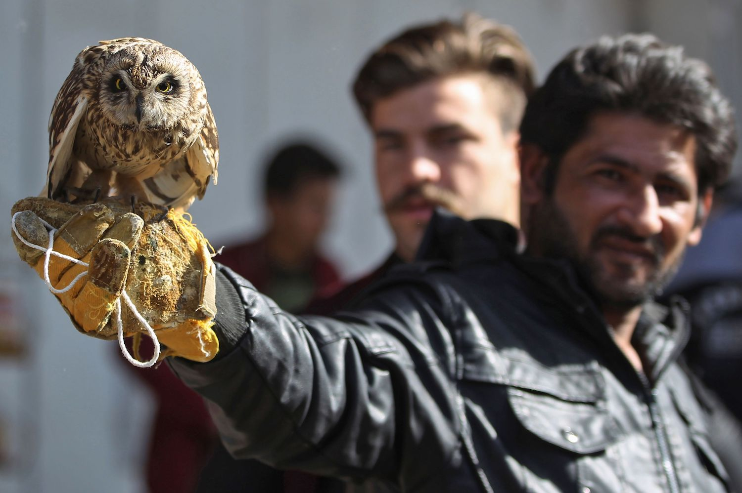 An Iraqi man holds up an owl at the Gazel animal market in Baghdad on Jan. 26. / AFP PHOTO / AHMAD AL-RUBAYE        (Photo credit should read AHMAD AL-RUBAYE/AFP/Getty Images)