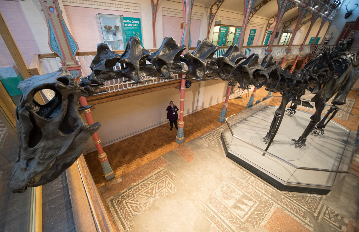 Dippy the dinosaur, a diplodocus skeleton on loan from the Natural History Museum is unveiled at Dorset County Museum in Dorchester on the first stage of an eight-stop tour of the UK on Feb. 9. Some 5 million people are expected to see Dippy over the next two years at venues ranging from the Welsh assembly to Norwich Cathedral.  (Photo by Matt Cardy/Getty Images)