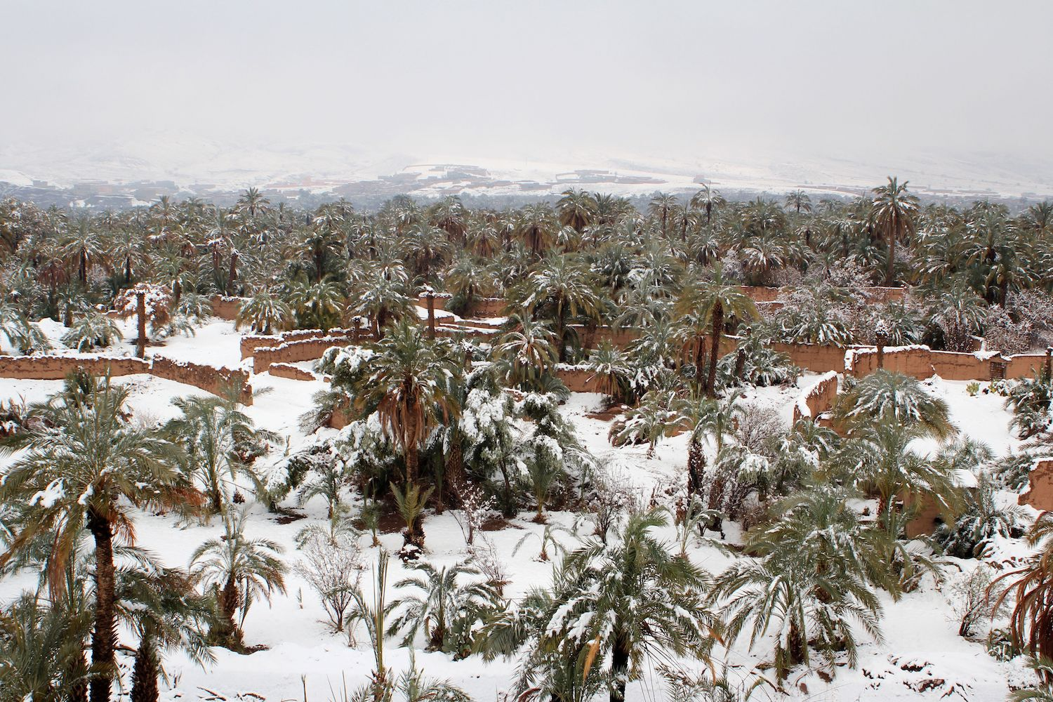 TOPSHOT - A picture taken on January 29, 2018 shows a palm grove covered in snow in the southern Moroccan town of Zagora. Snow on the sand dunes: the cities of Zagora and Ouarzazate, at the doors of the Moroccan desert, were covered with snow, an unusual phenomenon due to a cold snap from northern Europe. / AFP PHOTO / STR        (Photo credit should read STR/AFP/Getty Images)