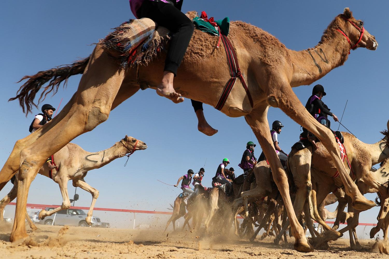 TOPSHOT - Jockeys race during the Sheikh Sultan Bin Zayed al-Nahyan camel festival, at the Shweihan racecourse in al-Ain on the outskirts of Abu Dhabi on February 2, 2018. / AFP PHOTO / KARIM SAHIB        (Photo credit should read KARIM SAHIB/AFP/Getty Images)