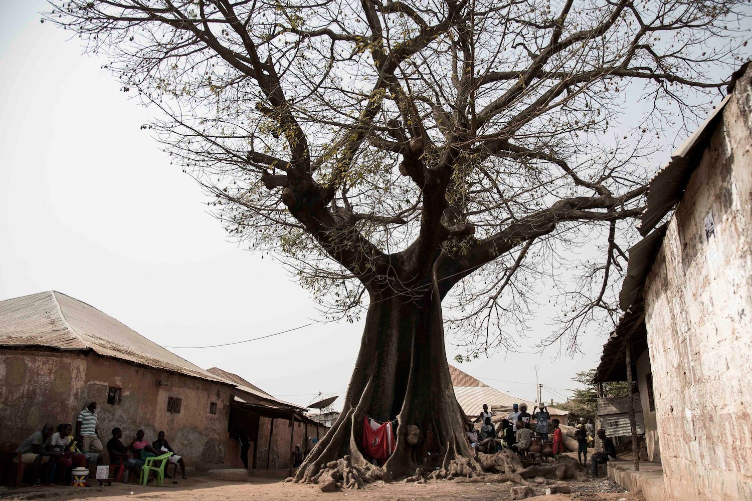 TOPSHOT - People shelter from the sun under a Baobab tree in the Mindara neighbourhood in Bissau on Mardi Gras on February 13, 2018.  / AFP PHOTO / Xaume Olleros        (Photo credit should read XAUME OLLEROS/AFP/Getty Images)