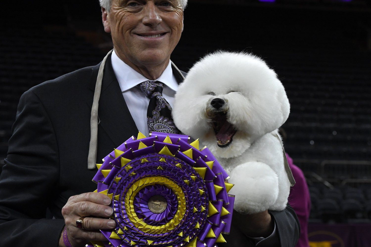 """TOPSHOT - """"Flynn"""" the Bichon Frise, with handler Bill McFadden, poses after winning """"Best in Show"""" at the Westminster Kennel Club 142nd Annual Dog Show in Madison Square Garden in New York February 13, 2018. / AFP PHOTO / TIMOTHY A. CLARY        (Photo credit should read TIMOTHY A. CLARY/AFP/Getty Images)"""