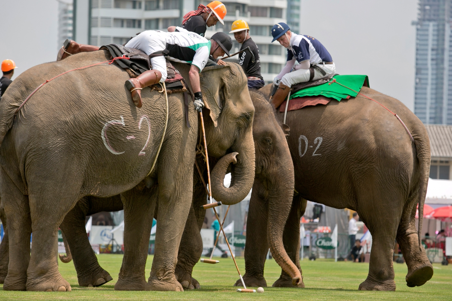 TOPSHOT - Players assisted by mahouts go for the ball during the King's Cup Elephant Polo Tournament in Bangkok on March 8, 2018.  Elephants tromped across a manicured pitch in Bangkok on March 8 in the kick-off of a polo tournament raising money for the animals, who are celebrated as a national symbol but often subject to abuse. / AFP PHOTO / Krit PHROMSAKLA        (Photo credit should read KRIT PHROMSAKLA/AFP/Getty Images)