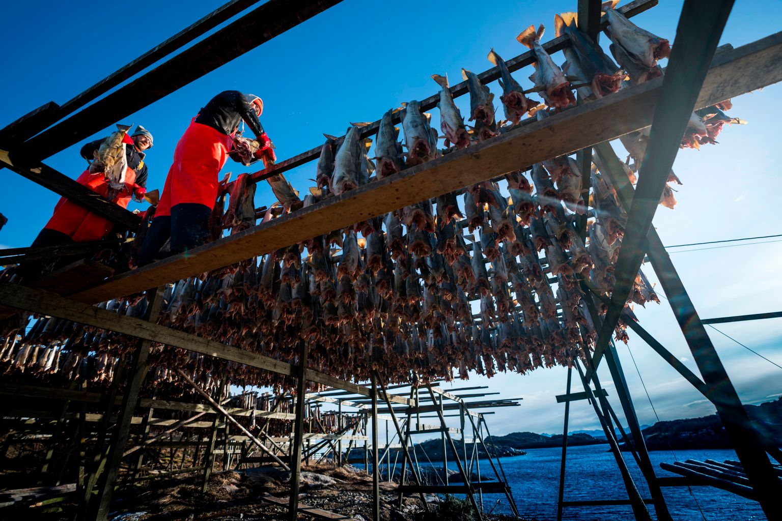 TOPSHOT - Fishing company workers hang arctic chars on wood high tables right after being fished, on March 6, 2018, in Henningsvaer, northern Norway, within Arctic Circle. Those fishes stay 6 months drying up on the air. / AFP PHOTO / Olivier MORIN        (Photo credit should read OLIVIER MORIN/AFP/Getty Images)
