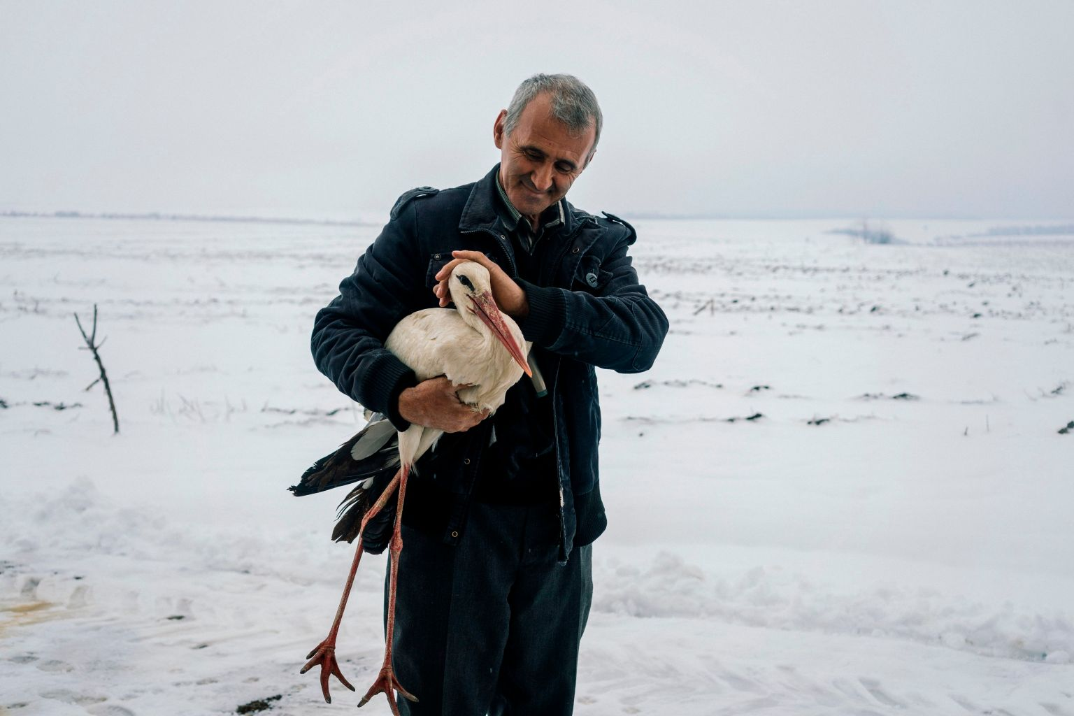 """TOPSHOT - Safet Halil, 53, holds a stork in his farm backyard in the village of Zaritsa on March 21, 2018.  """"I found five frozen storks near the village road the day before yesterday. I took them home, lit a stove to warm them and fed them fish,"""" Safet Halil, 53, from the village of Zaritsa told AFP on March 21, 2018. The return of winter weather in Bulgaria's northeast caught hundreds of migrating birds in an icetrap earlier this week, prompting a surprising response from many locals in the areas around the town of Dulovo. / AFP PHOTO / Dimitar DILKOFF        (Photo credit should read DIMITAR DILKOFF/AFP/Getty Images)"""