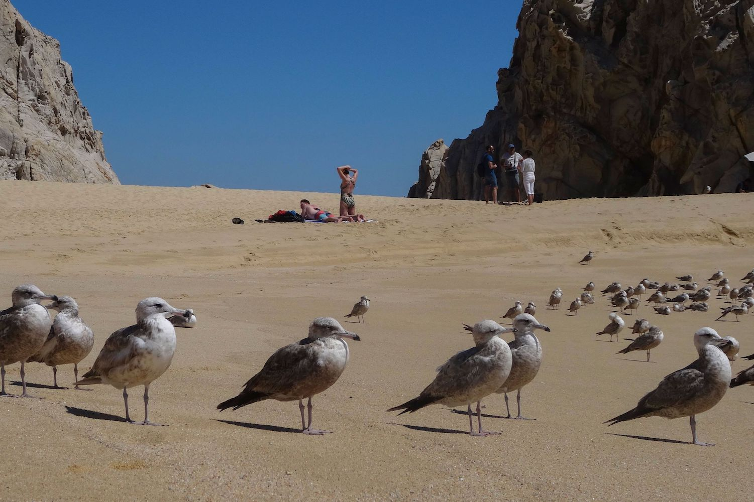 "Seagulls gather on the ""Love Beach"" at Los Cabos, Baja California Sur state, Mexico on March 10 (DANIEL SLIM/AFP/Getty Images)"