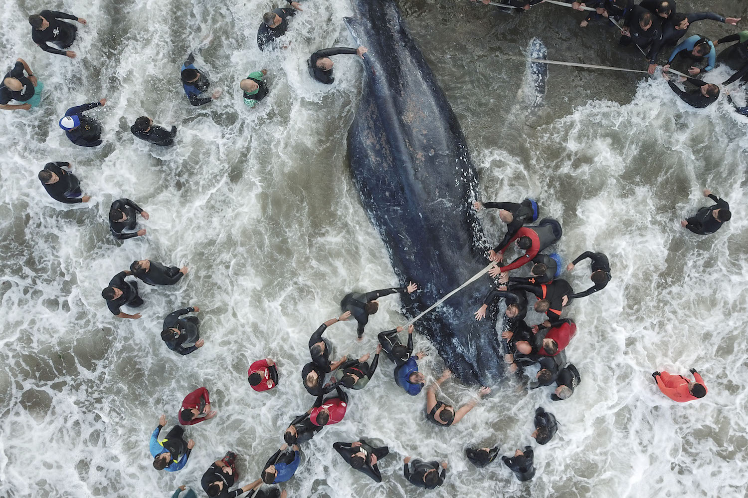 "Picture released by Telam showing rescue workers and locals helping a stranded whale in Mar del Plata, Argentina, on April 9, 2018. The whale died despite rescue efforts.  / AFP PHOTO / TELAM / DIEGO IZQUIERDO / Argentina OUT / RESTRICTED TO EDITORIAL USE - MANDATORY CREDIT ""AFP PHOTO / TELAM / DIEGO IZQUIERDO"" - NO MARKETING NO ADVERTISING CAMPAIGNS - DISTRIBUTED AS A SERVICE TO CLIENTS        (Photo credit should read DIEGO IZQUIERDO/AFP/Getty Images)"