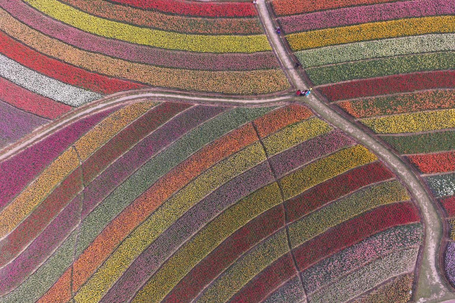 An aerial view shows some 30 million tulips made up of more than 300 varieties  April 17 at the tulip park of Dafeng district in Yancheng, Jiangsu Province of China. VCG via Getty Images