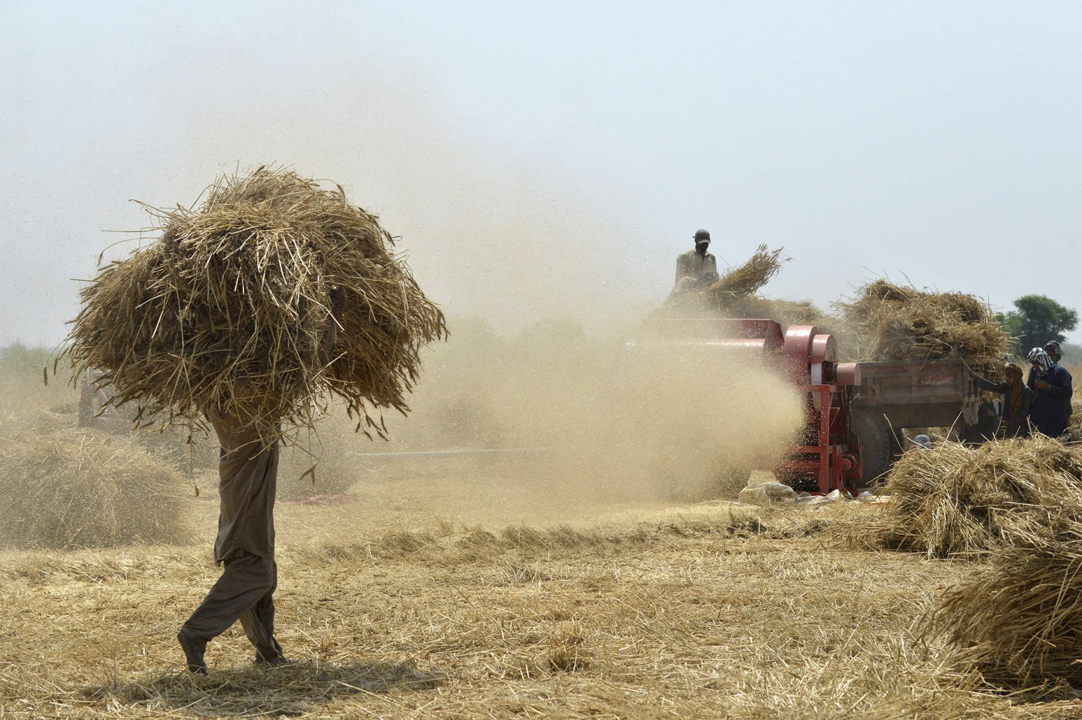 Pakistani farmers use a threshing machine to refine wheat during harvesting on the outskirts of Lahore on April 25. ARIF ALI/AFP/Getty Images