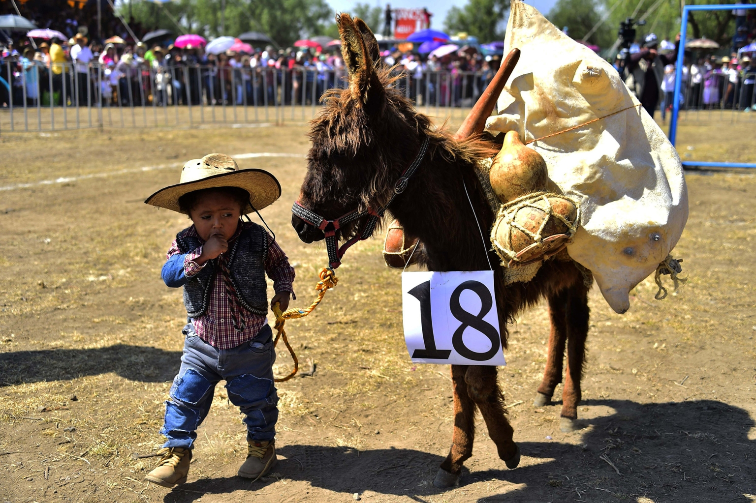 A donkey is presented during the National Donkey Fair in Otumba, Mexico, on May 1. The fair brings together about 7,000 people in what participants consider a day off for the cargo animal, but animal rights activists have questioned as a cruel ritual in which the donkeys are painted, whipped, ridden by grown men, and sometimes given alcohol. PEDRO PARDO/AFP/Getty Images