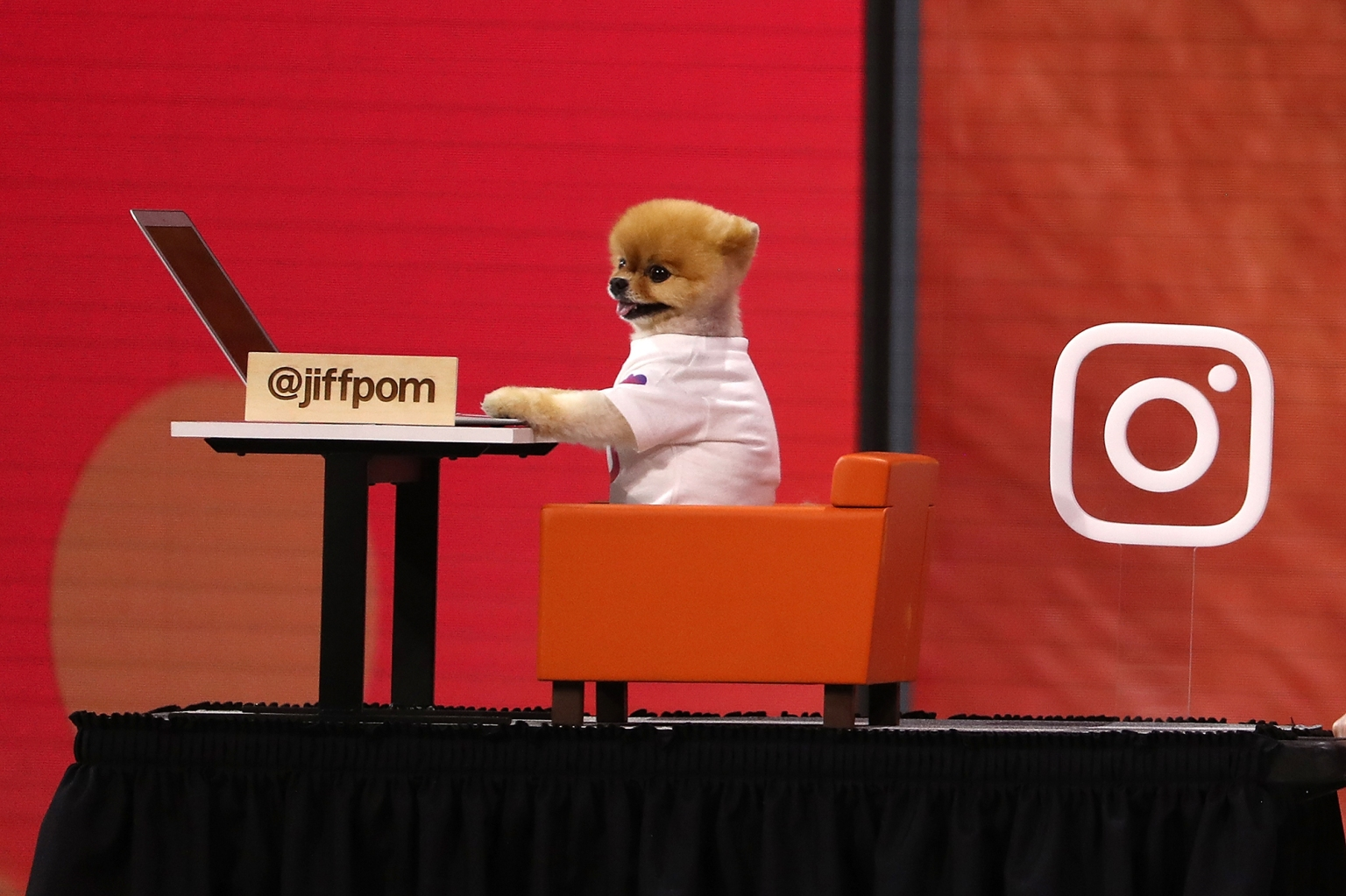 Instagram star user JiffPom, a pomeranian with more than 8 million Instagram followers, appears during the F8 Facebook Developers conference on May 1 in San Jose, California. Facebook CEO Mark Zuckerberg delivered the opening keynote to the developer conference that runs through May 2. Justin Sullivan/Getty Images