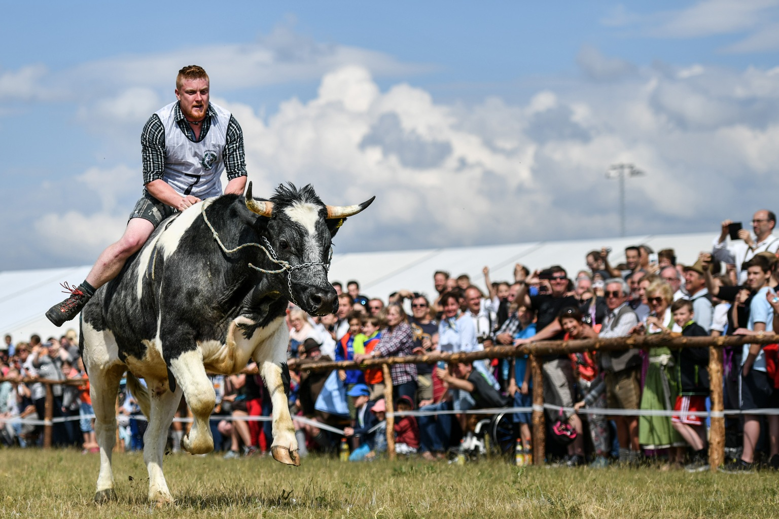 A rider clings to his ox during a race on Ascension in Bavaria on May 10 in Taufkirchen, Germany. Eight oxen and four camels took part in the 100-meter-long race, an animal combo that is reportedly a first in Bavarian history after organizers had trouble finding enough male oxen trained for racing.  Philipp Guelland/Getty Images