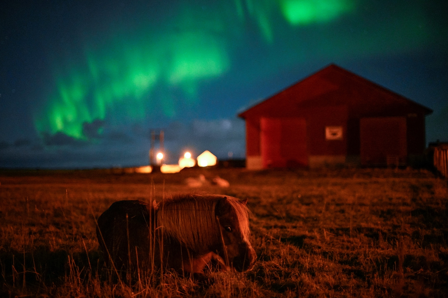 A pony grazes under the northern lights in Unstad, Norway, on Sept. 30. Olivier Morin/AFP/Getty Images
