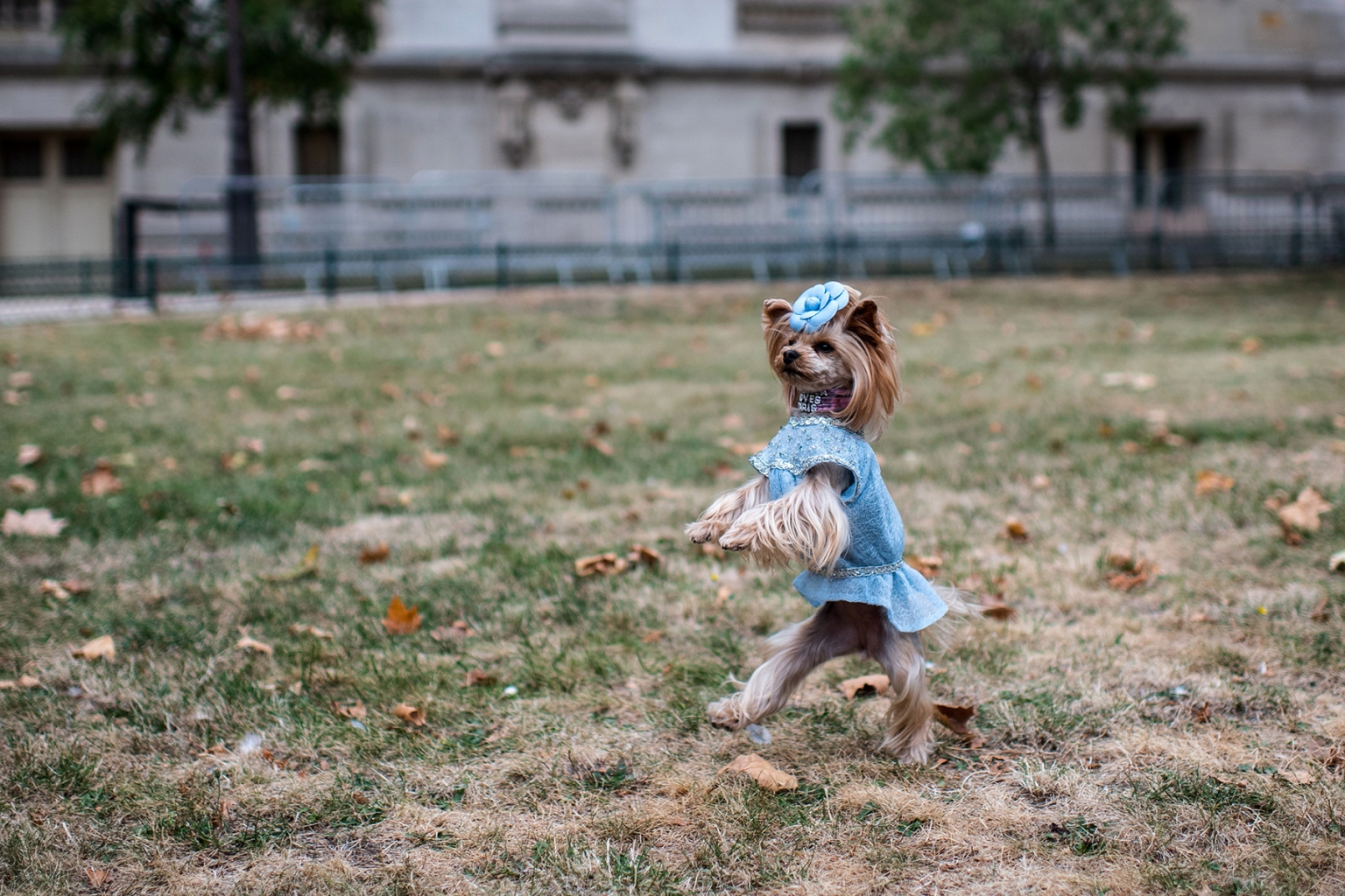 A dog does its best catwalk prior to the Chanel Spring-Summer Ready-to-Wear collection fashion show at the Grand Palais in Paris on Oct. 2. -/AFP/Getty Images