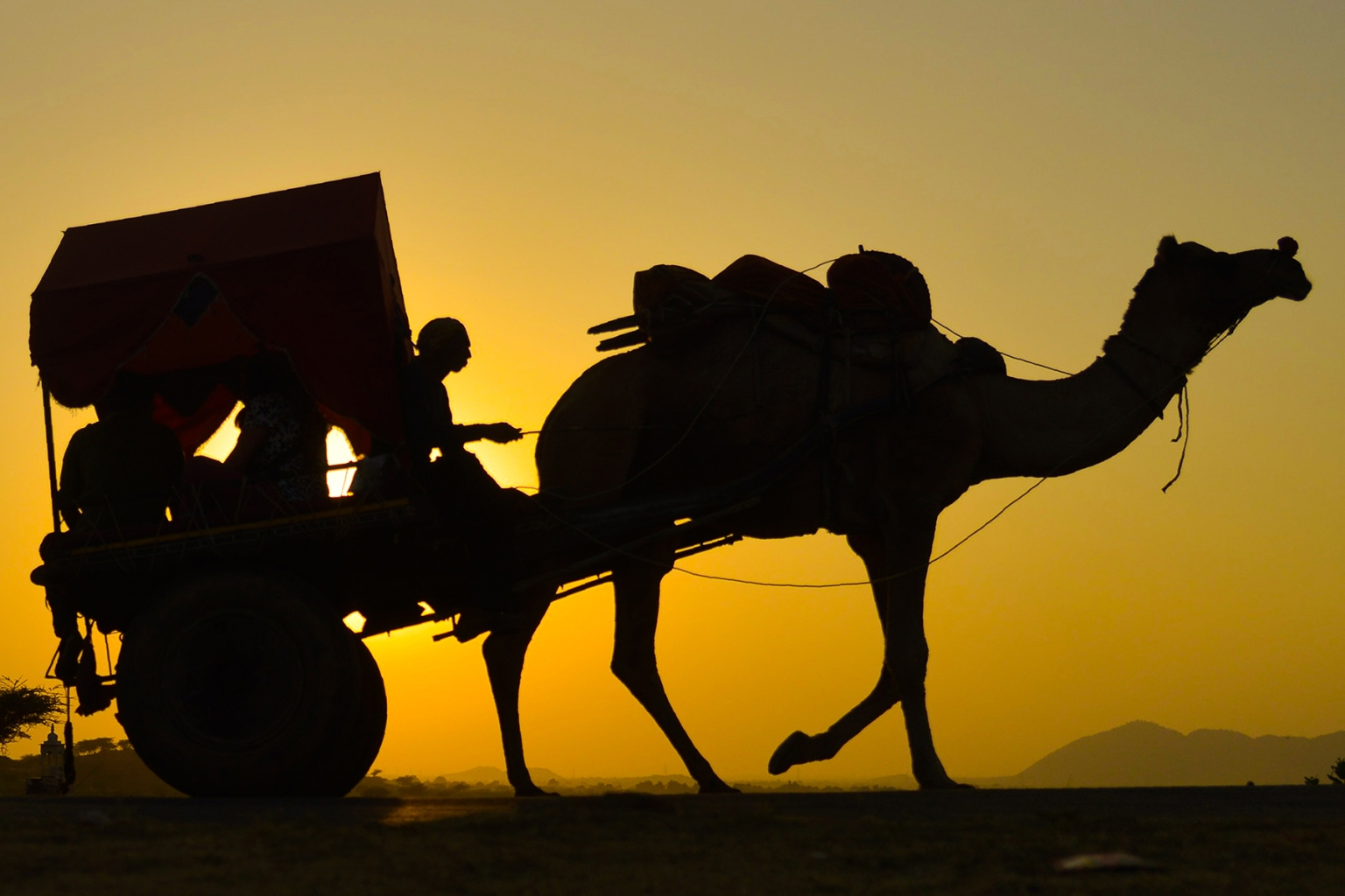 An Indian man rides on a camel cart during the Pushkar Camel Fair in the western state of Rajasthan on Nov. 12. Thousands from the region come to the five-day event where livestock, mainly camels, are traded at one of the world's largest camel fairs. SHAUKAT AHMED/AFP/Getty Images