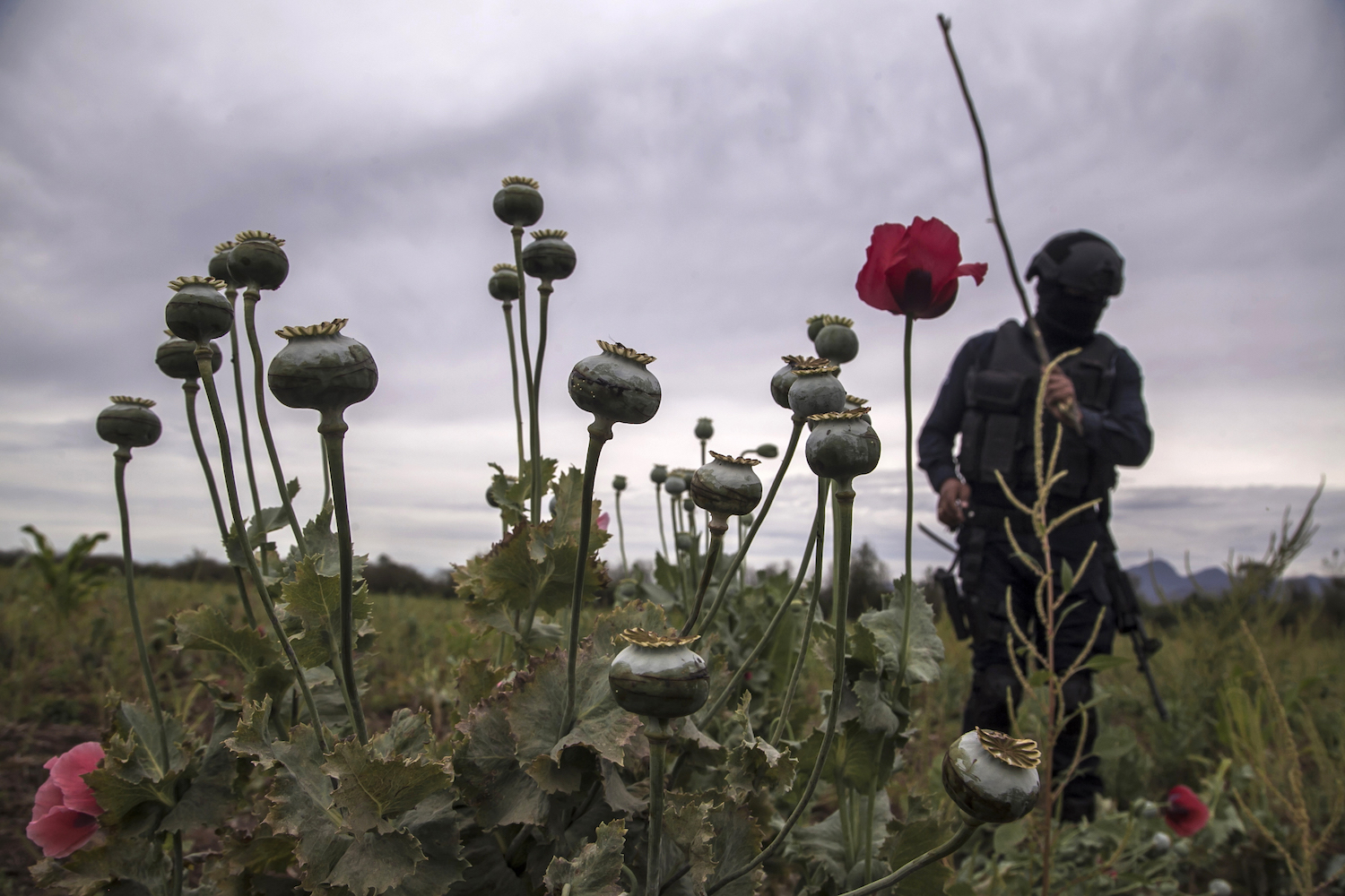 Mexico's War on Drugs Failed – Foreign Policy