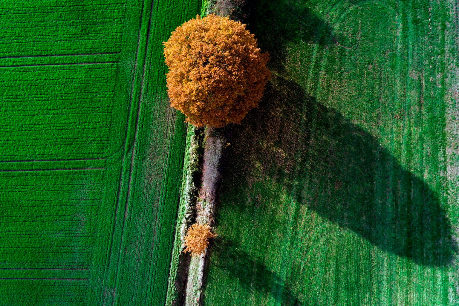 Autumn colors trees in a field in Vinnum, Germany, on Nov 13. INA FASSBENDER/AFP/Getty Images