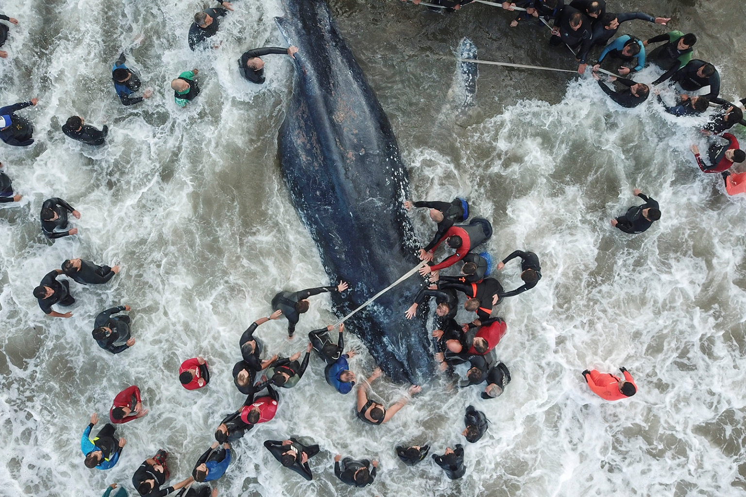 Rescue workers and locals attempt to save a stranded whale in Mar del Plata, Argentina, on April 9. The whale died despite their efforts. IEGO IZQUIERDO/AFP/GETTY IMAGES