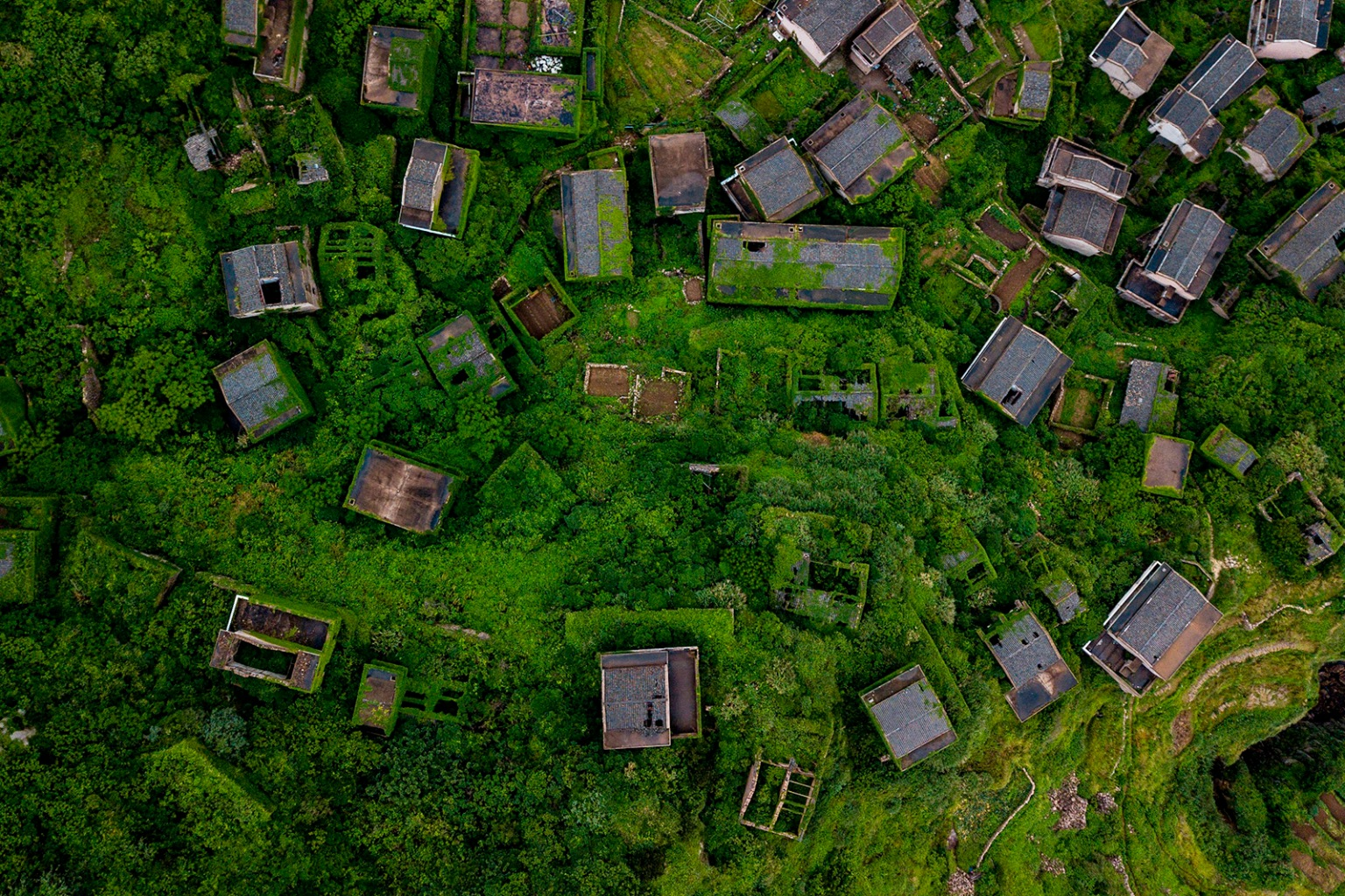 Lush vegetation engulfs an abandoned village in Houtouwan on Shengshan island, in China's eastern Zhejiang province, on May 31. JOHANNES EISELE/AFP/Getty Images