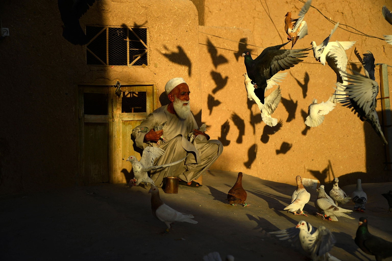 Afghan pigeon fancier Abdul Ghani feeds his pigeons as they fly from the rooftop of his home in Herat province on June 30. HOSHANG HASHIMI/AFP/GETTY IMAGES