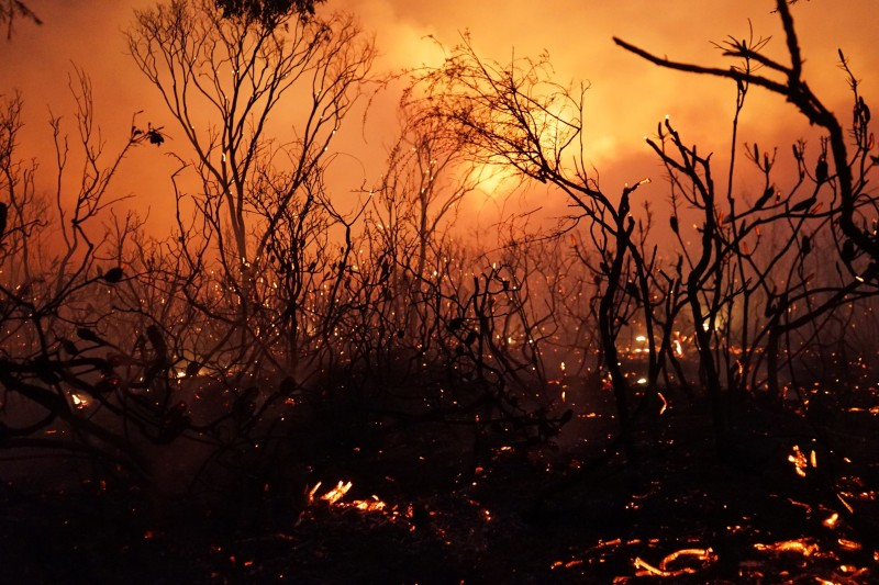 Burnt bushes are seen as a blaze moves through Deepwater National Park in Queensland, Australia on Nov. 28, 2018. (Rob Griffith/AFP/Getty Images)