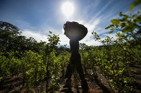 A farmer carries a sack of coca leaves in a field in the Guaviare department, Colombia, on Sept. 25, 2017. (Raul Arboleda/AFP/Getty Images)