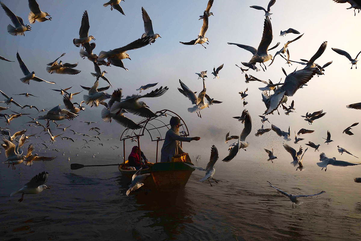 An Indian man feeds migratory seagulls at Narmada River early in the morning in Jabalpur in the Indian state of Madhya Pradesh on Jan. 29. UMA SHANKAR MISHRA/AFP/Getty Images