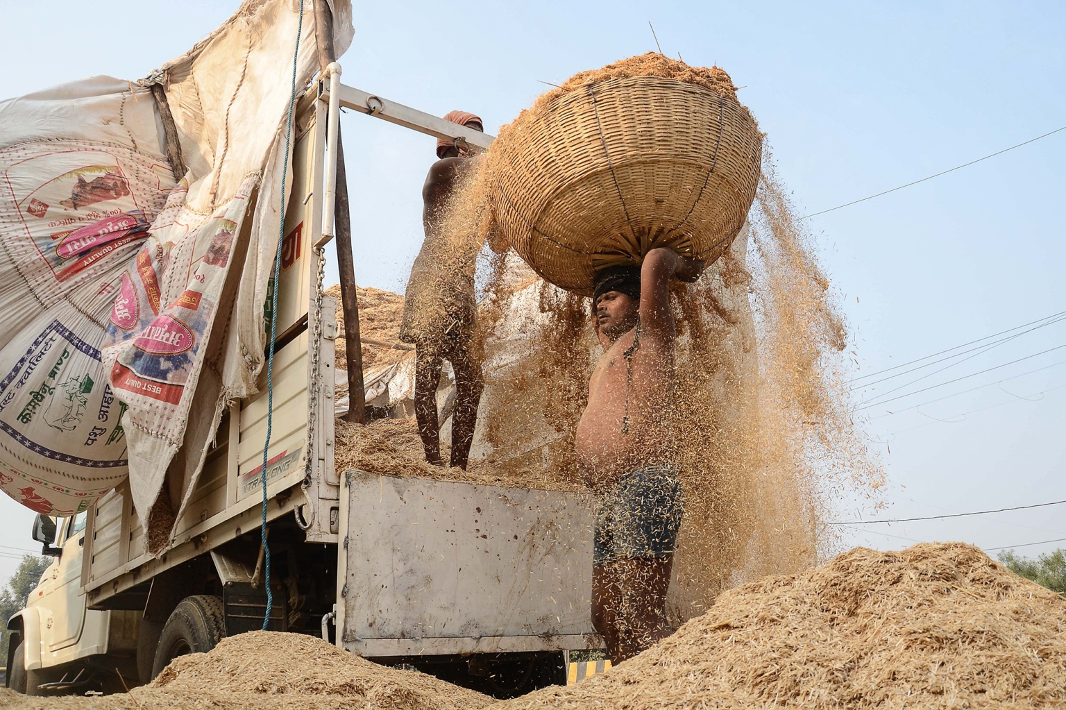 An Indian laborer carries a load of wheat straw on his head to be used for animal feed on the outskirts of Jabalpur in Madhya Pradesh state on Feb. 4. (Uma Shankar Mishra/AFP/Getty Images)