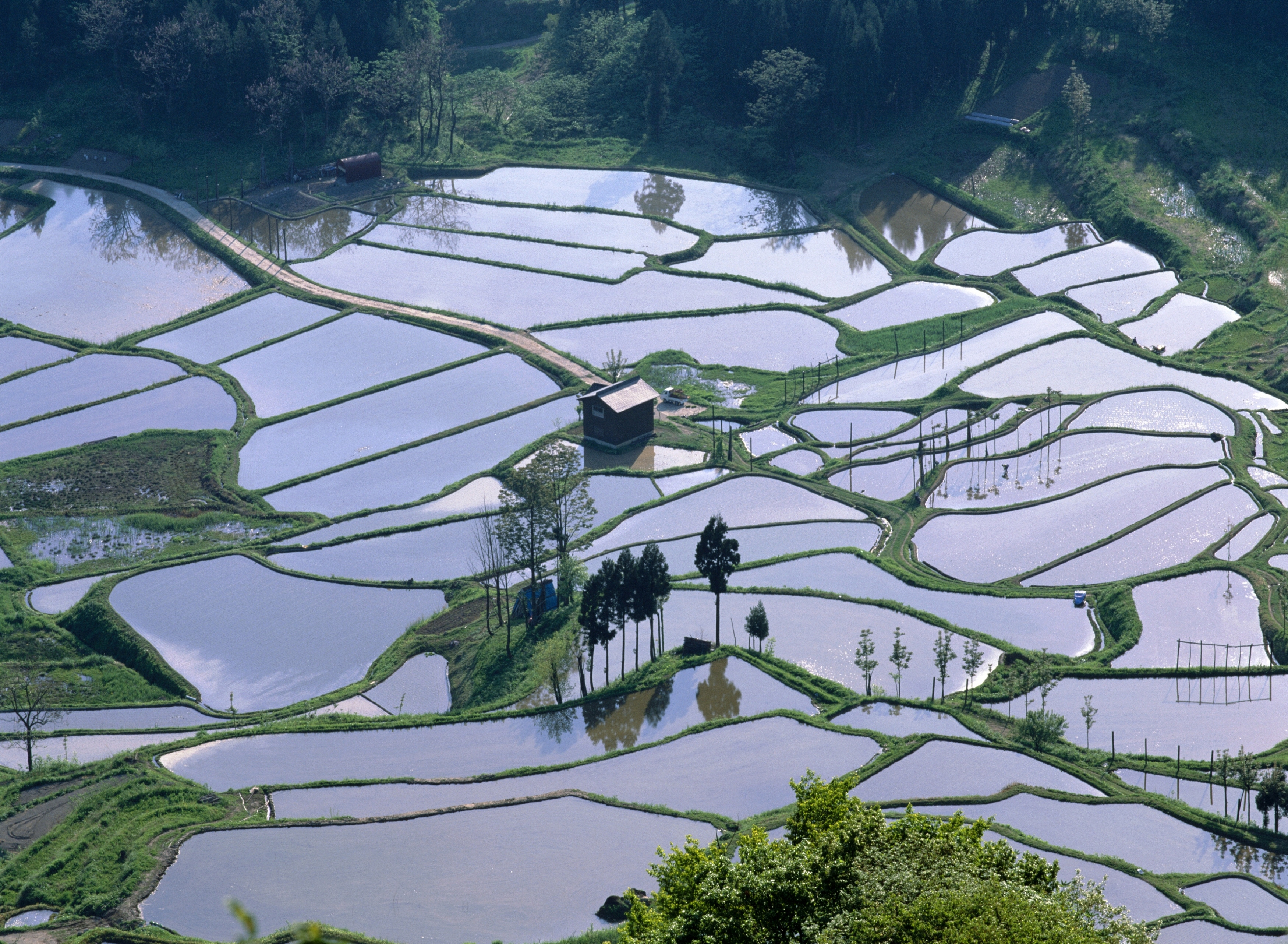 Terraced rice fields in Niigata Prefecture. OFFICE OF THE GOVERNOR OF NIIGATA