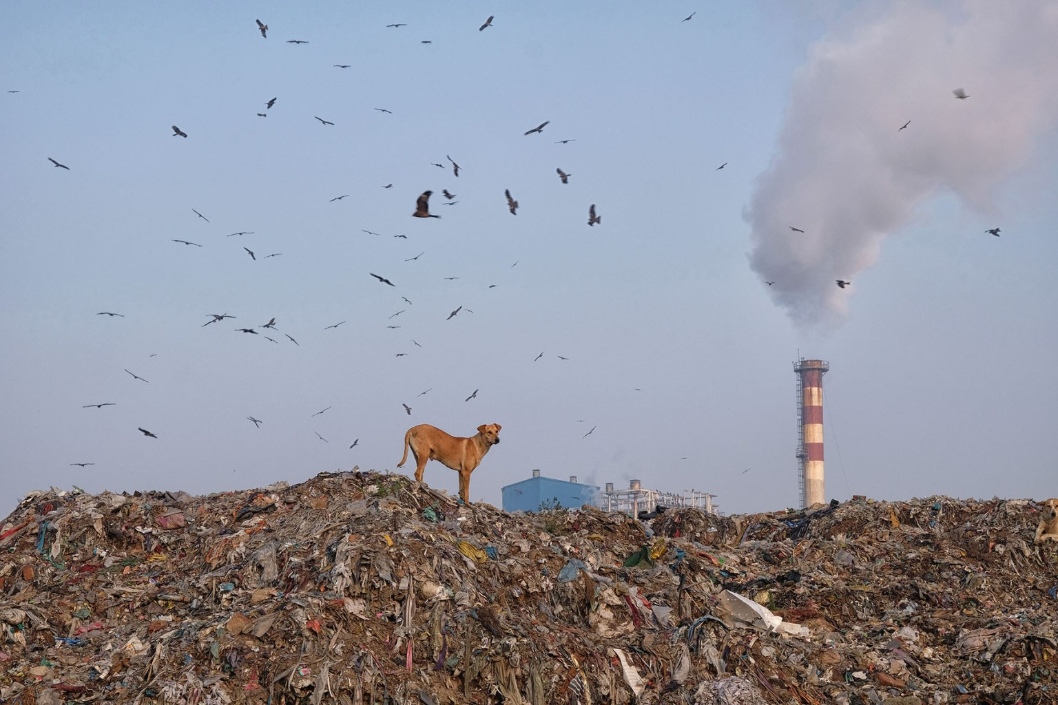 A dog stands at the top of a mountain of garbage as birds fly overhead at the Ghazipur landfill site in New Delhi on March 5. NOEMI CASSANELLI/AFP/Getty Images