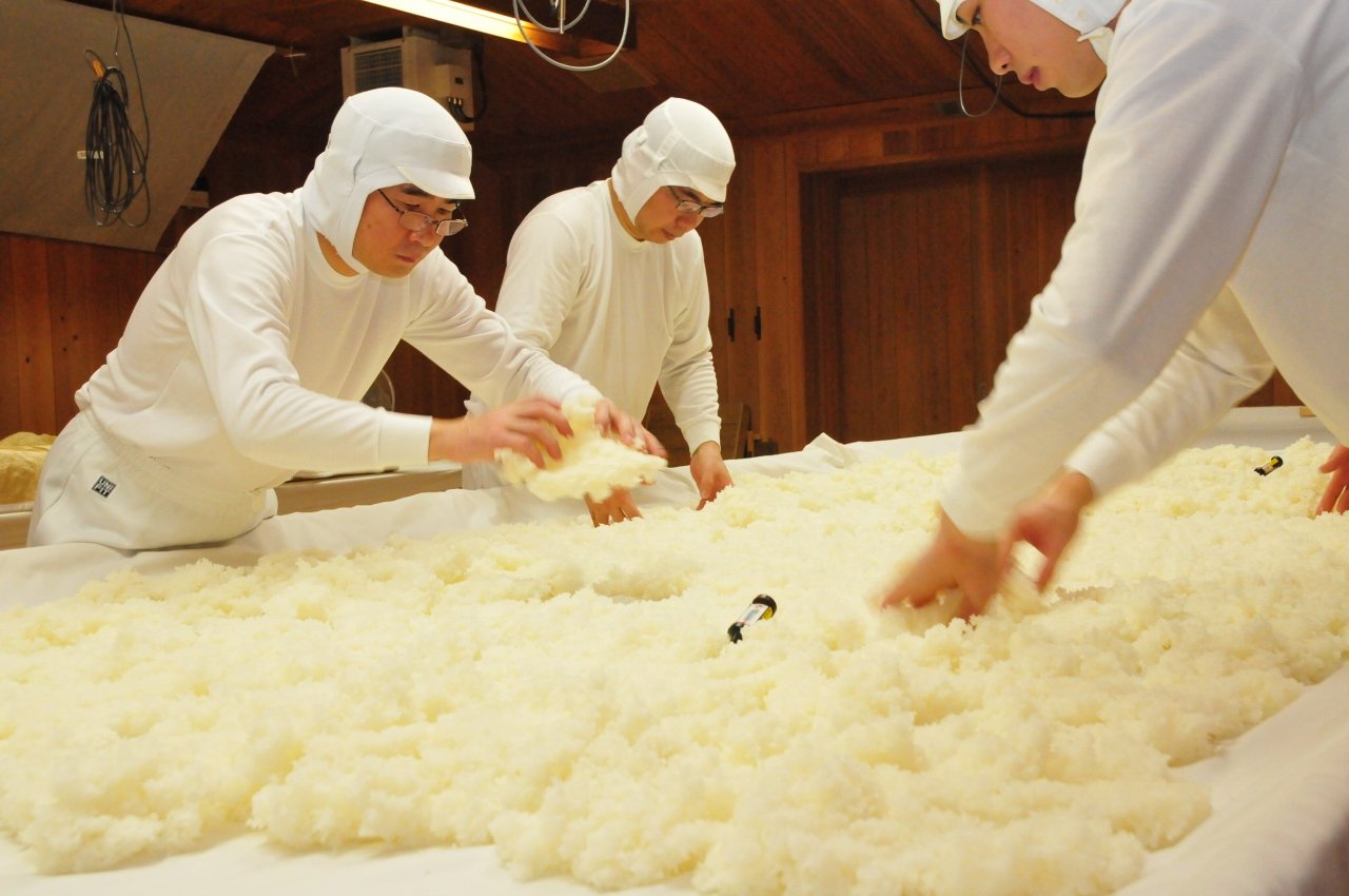 """A sake brewer once said, """"the quality of sake can never exceed the quality of its ingredients."""" Niigata's Asahi-Shuzo Sake Brewing lives by this rule, working with local communities to cultivate top-quality rice and preserve the pristine environment that provides water. Pictured: Brewers preparing rice for KUBOTA sake.  ASAHI-SHUZO SAKE BREWING"""