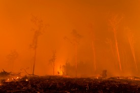 A peatland forest burns to make way for a palm oil plantation on Nov. 1, 2015, on the outskirts of Palangkaraya, in Central Kalimantan, Indonesia. (Ulet Ifansasti/Getty Images)
