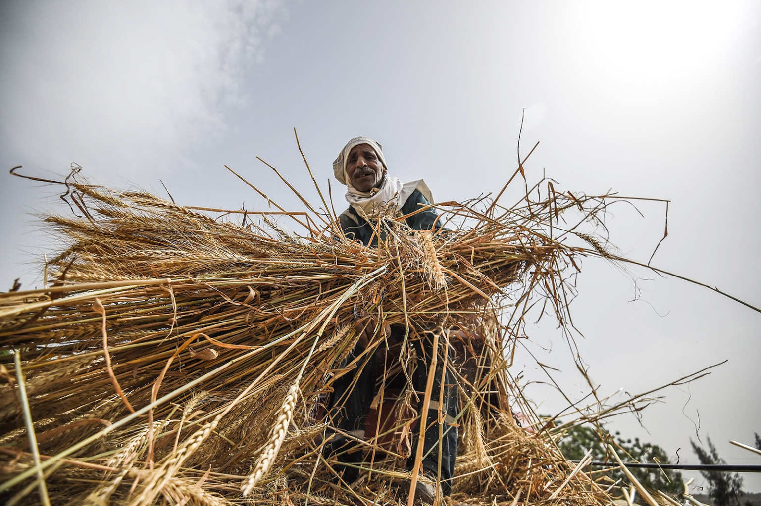 An Egyptian worker harvests wheat in Saqiyat al-Manqadi village in the northern Nile Delta province of Menoufia in Egypt on May 1. MOHAMED EL-SHAHED/AFP/Getty Images