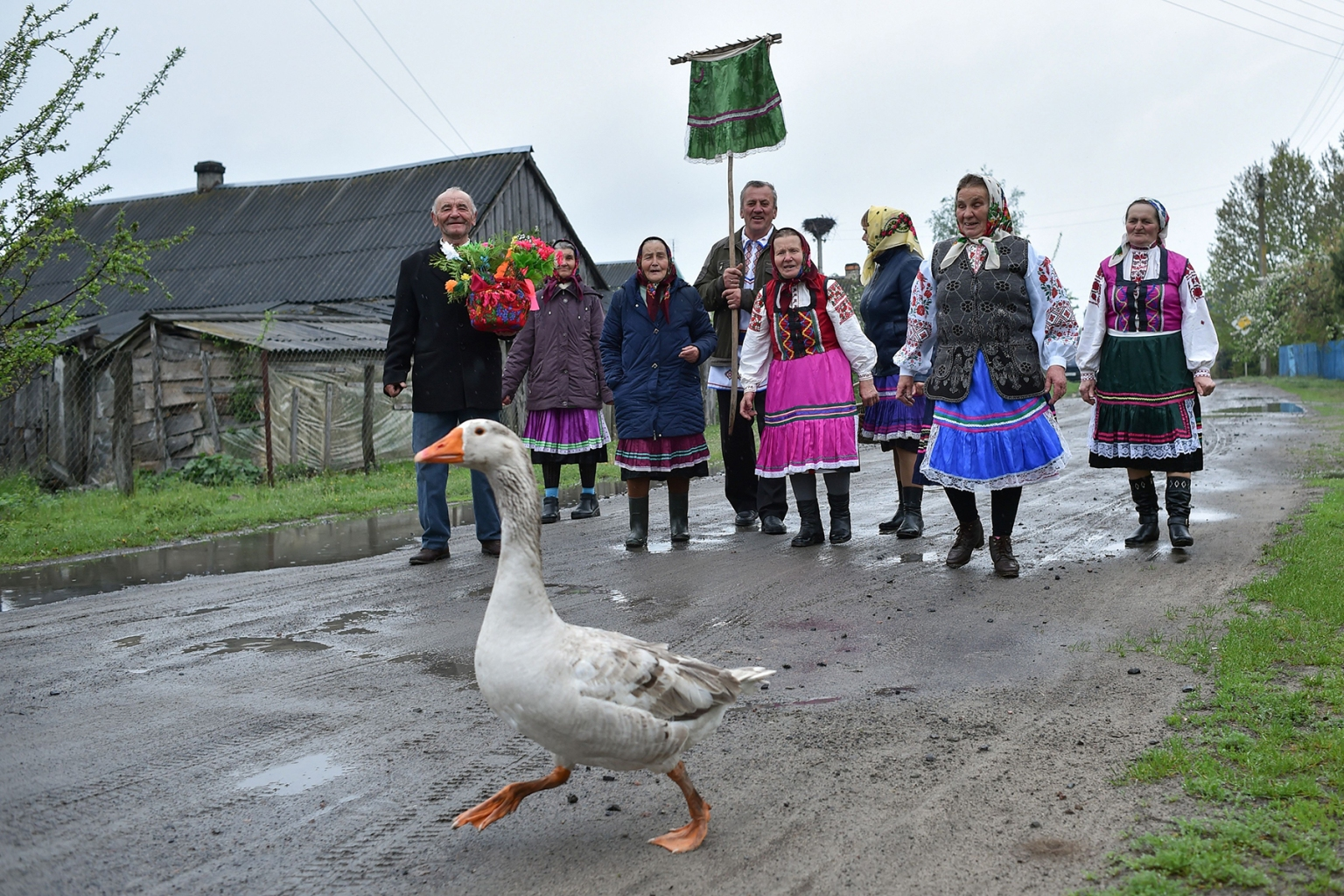 A goose walks on the road as Belarusian villagers take part in the Yurya religious rite to bring a good harvest in the village of Lutki, south of Minsk, on May 6. SERGEI GAPON/AFP/Getty Images
