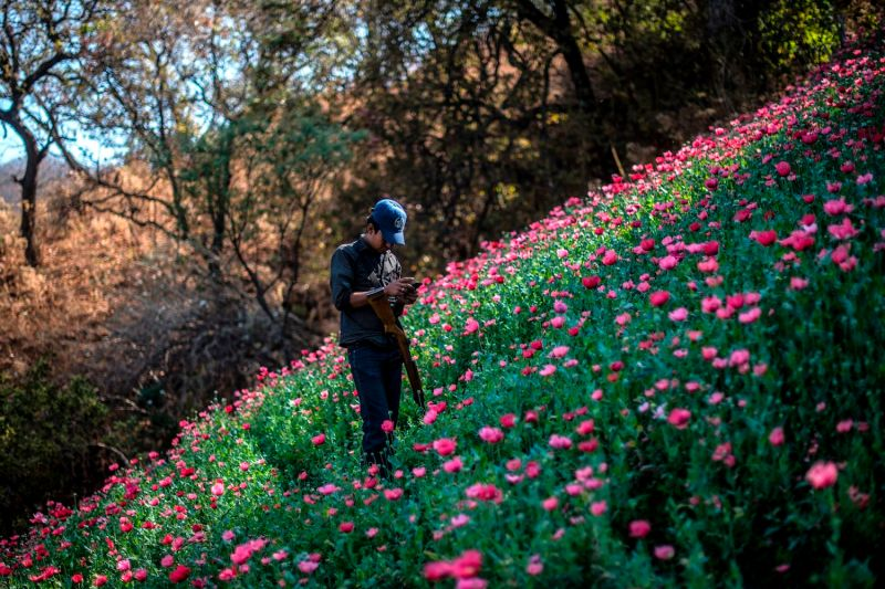 A Guerrero community police member stands guard at an illegal poppy field in Heliodoro Castillo, Guerrero state, Mexico, on March 25, 2018.