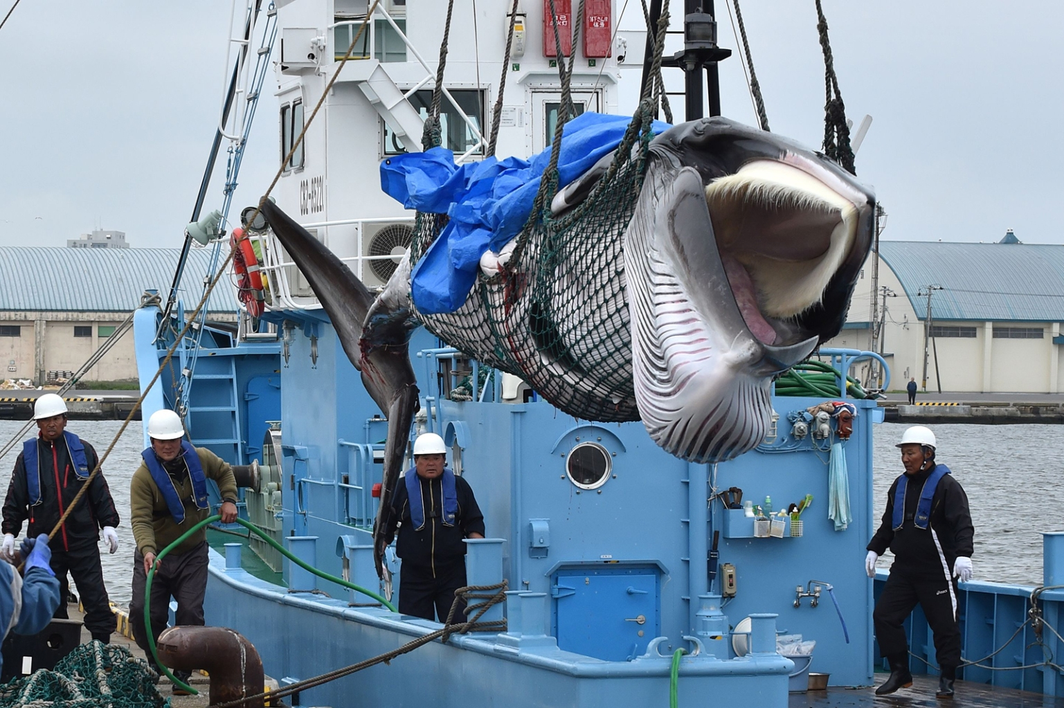 A captured minke whale is lifted by a crane at a port in Kushiro, Japan, on July 1, as Japan began its first commercial whale hunts in more than three decades. KAZUHIRO NOGI/AFP/Getty Images
