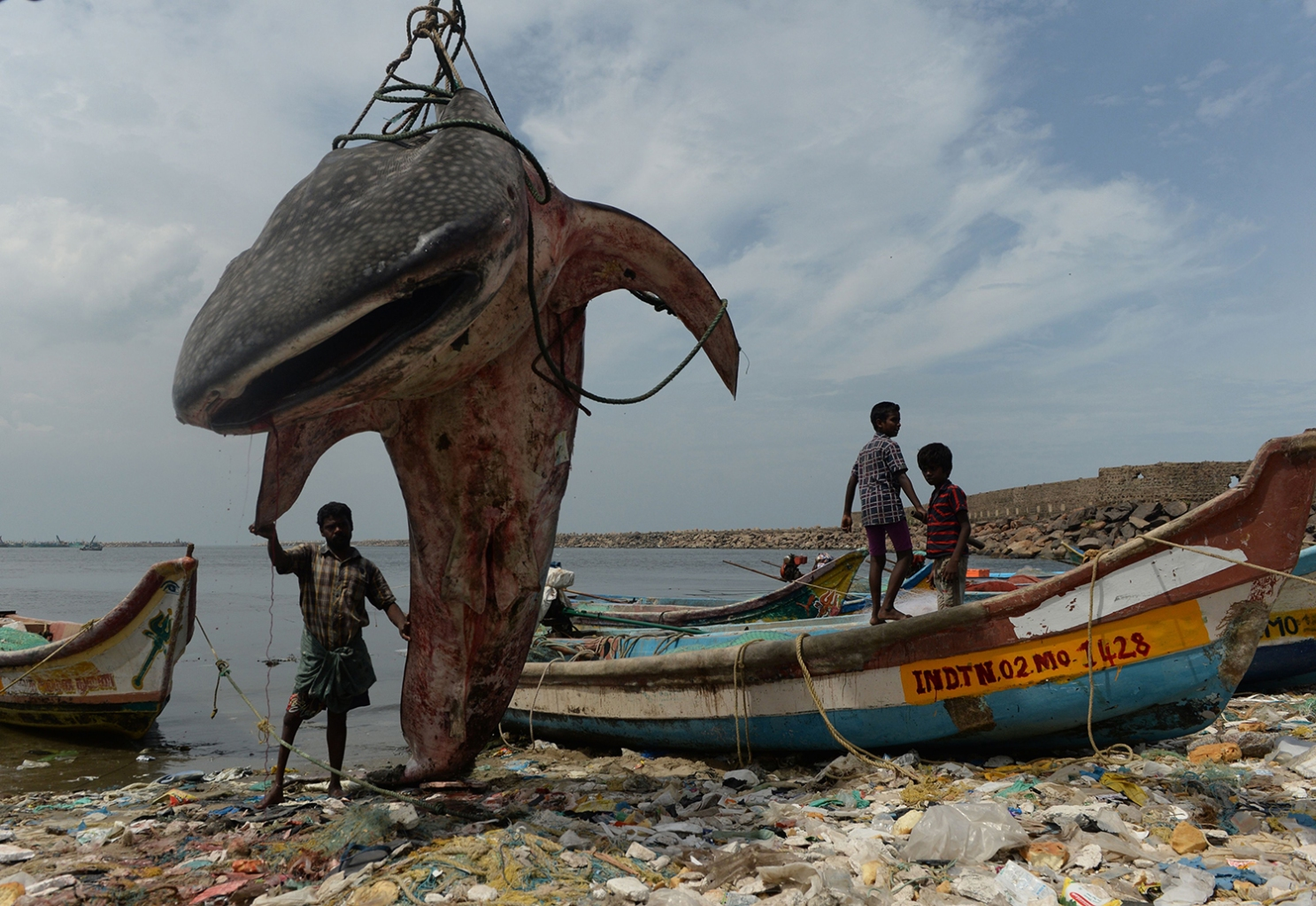 An Indian man stands next to a whale shark that washed ashore and was lifted out by a crane for inspection in the Kasimedu fishing harbour in Chennai on July 27. ARUN SANKAR/AFP/Getty Images