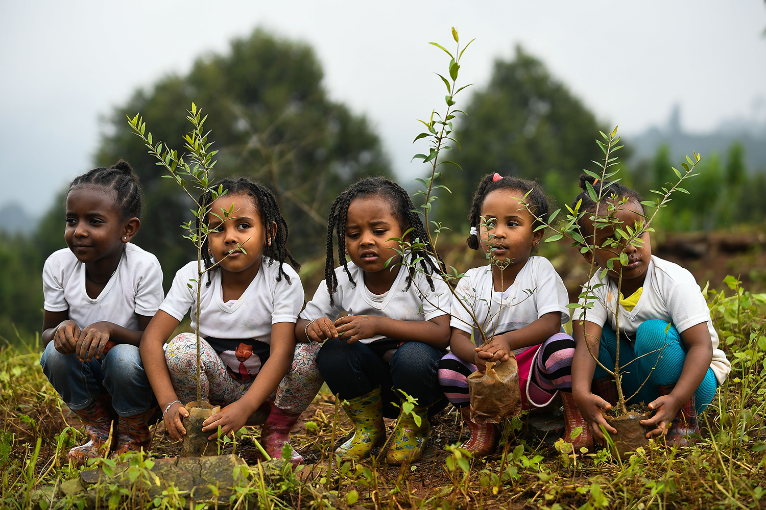 Ethiopian girls take part in a national tree-planting drive in the capital Addis Ababa on July 28. Ethiopia says it plans to plant 4 billion trees by October as part of a global movement to restore forests and help fight climate change. MICHAEL TEWELDE/AFP/Getty Images